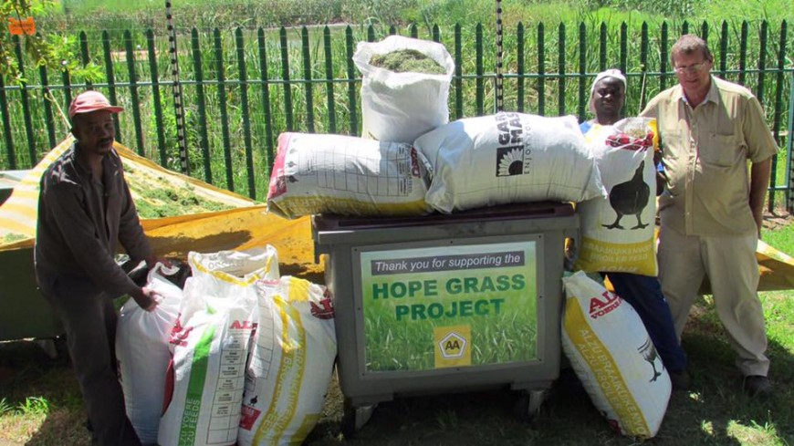 Project Hope Grass